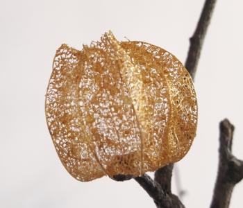 sophie blanc doreuse (2)